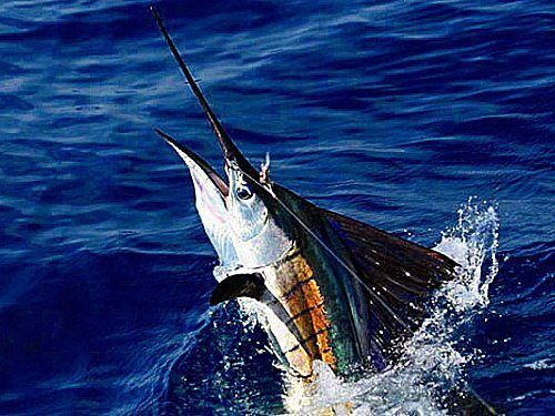 Deep Sea Fishing - Isla Mujeres Vacation Rental